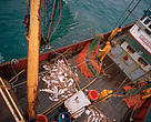 Deep sea fishing: Landing the catch on a deep sea trawler North Atlantic Ocean