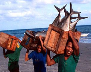 Local fishermen with tuna catch Sulu Sea, Philippines  	© Jürgen FREUND / WWF