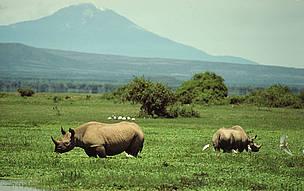 Black rhino habitat