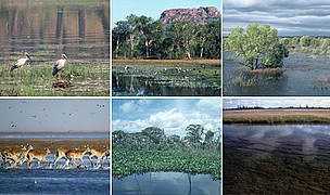 Montage of global wetlands / ©: WWF-Canon / Helena  TELKÄNRANTA; WWF-Canon / Martin HARVEY; WWF-Canon / Hartmut JUNGIUS; WWF-Canon / Martin HARVEY; WWF-Canon / Y.-J. REY-MILLET; Nigel Allan