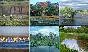 Global wetlands montage.  	© From left to right (clockwise):  1. WWF / Helena TELKÄNRANTA; 2. WWF / Martin HARVEY; 3. WWF / Hartmut JUNGIUS; 4. Frank PARHIZGAR / WWF-Canada; 5. WWF / Y.-J. REY-MILLET; 6. WWF / Martin HARVEY;