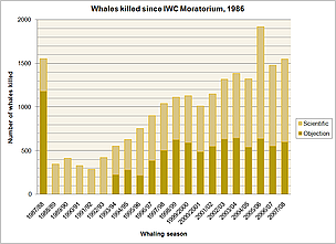 Whales killed since IWC moratorium. 1986 - 2008.  	© WWF
