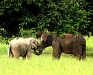 Wild elephants at Kuiburi National Park