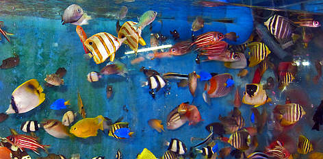 Wwf for Reef fish for sale