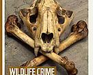 WWF's Wildlife Crime Scorecard report ranks 23 governments implicated in illegal trade of ivory, rhino horn and tiger parts.