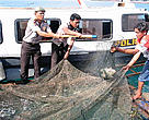Indonesian police confiscating humphead wrasse from a fishing boat near the Bunaken National Marine Park.