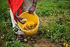 Zaineb Malaicha, a farmer from  Chemi Chemi, Lake Naivasha, Kenya ©WW213001_Simon_Rawles