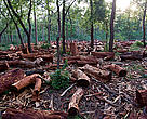 Deforestation and fire wood collection is destroying habitats.