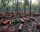 The need for firewood is a major cause for deforestation in Nepal. Finding firewood is an ever more strenuous task, usually carried out by women.