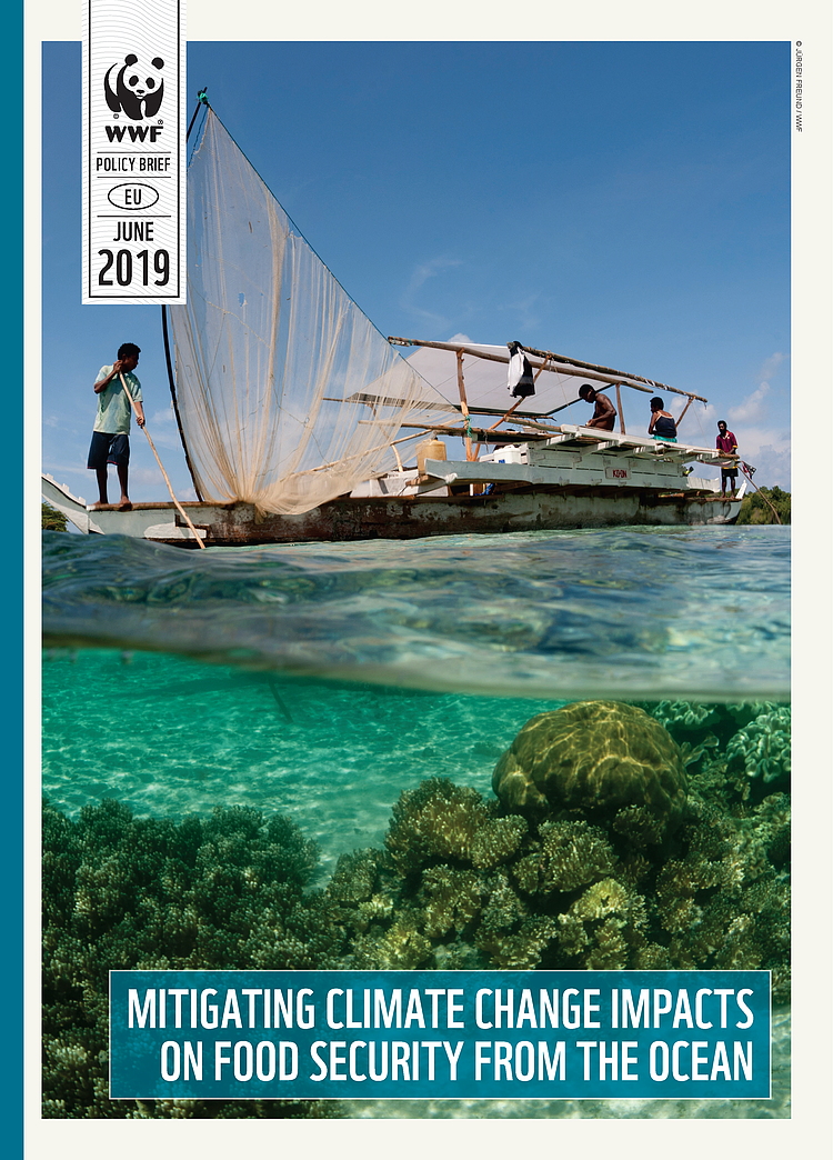Policy briefing: Mitigating climate change impacts on food security from the ocean
