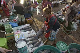 Local villagers buy fish and other fresh produce; Mounlapamok District market, Champassak Province Laos.