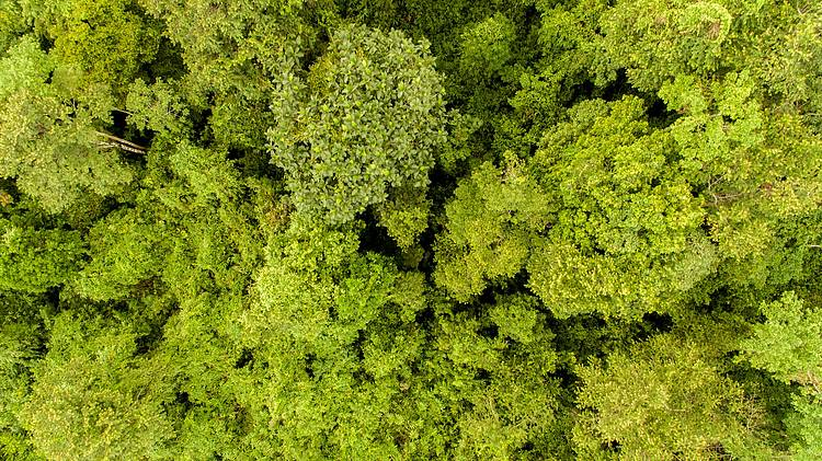 Sabah Forest Policy 2018 A Step Forward in Sabah's Environmental Conservation