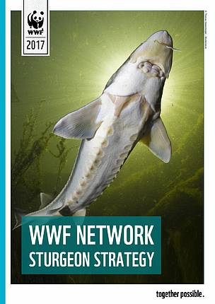 WWF Sturgeon Strategy cover