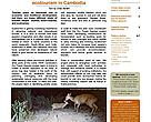 WWF Cambodia newsletter, Oct-Dec 2007