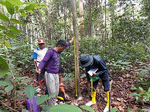 Suparjono, Borneo Elephant Survey, North Kalimantan, Heart of Borneo, HoB, WWF-Indonesia