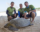 EWS-WWF Marine Team tagging green turtles in May 2016