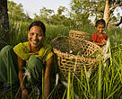 Women cutting grass. Khata, Royal Bardia National Park buffer zone, western Terai, Nepal.