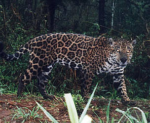 Argentina puts legal muscle behind Atlantic Forest protection