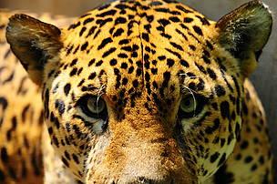 Declaración de WWF sobre las decisiones de la CITES sobre el comercio