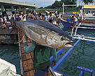 Yellow fin tuna in fish market/Philippines