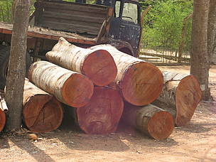 Eastern and Southern African countries announce groundbreaking move to curb regional illegal timber trade