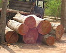 Illegal timber seized in southern Tanzania.