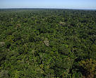 Ariel view of forest cover