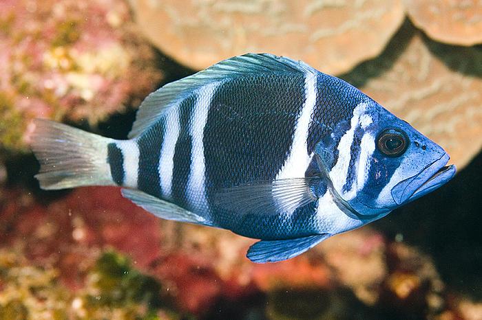 Fish | WWF