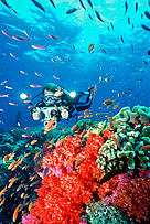 Incomes from dive tourism can strongly contribute to the development of small island developing states