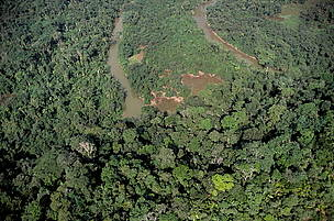 Argentina, Paraguay make historic forest pledge