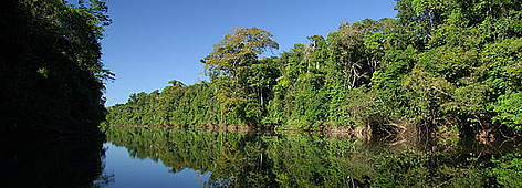 how big is the amazon rainforest