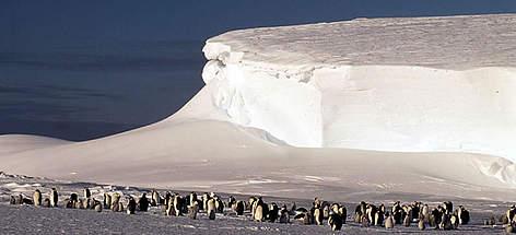 Antarctica Wwf