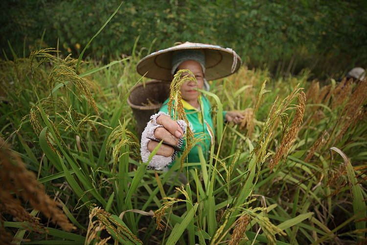 Women and Food Security