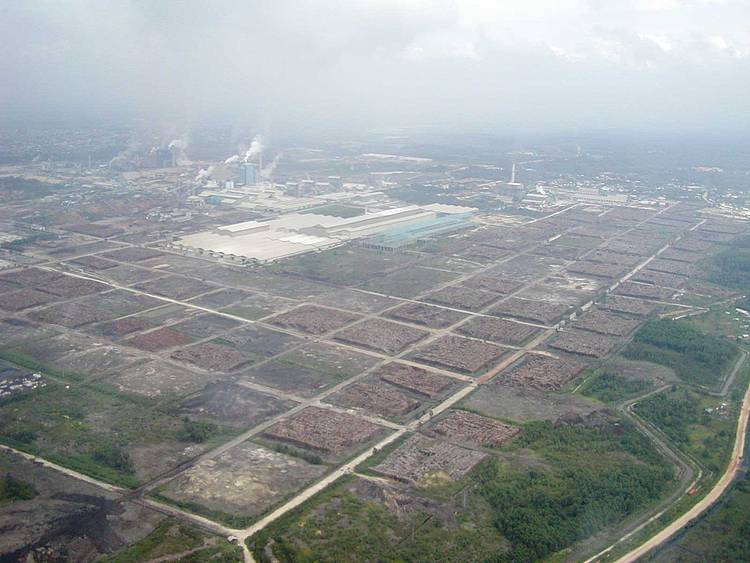 Monitoring the paper industry | WWF