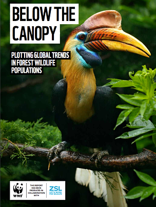 Informe: Below the canopy
