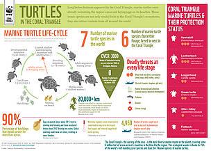 Marine turtles | WWF
