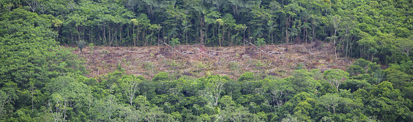 deforestation of the amazonian rainforest Free essay: deforestation in the amazon rainforest: human degradation and its  consequences deforestation is a word that displays an image of cruelty against.