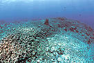 Destroyed coral reef as result of dynamite fishing, the Philippines.