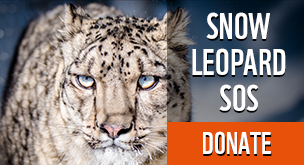 Snow Leopard SOS - Donate