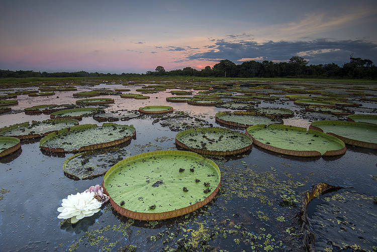 Call for Wetland Decade under the UN Decade on Ecosystem Restoration (2021-2030)