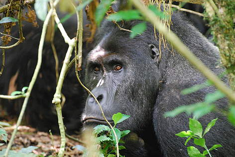 WWF in the Democratic Republic of Congo (DRC) | WWF