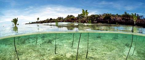 Coastal ecosystems can act as a buffer against tsunamis. Mangrove reforested area in the ... rel=