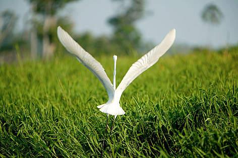 New Guinea birds | WWF