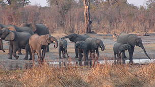 WWF Zimbabwe facilitates the updating of fire management plans for Hwange National Park (HNP) and its buffer zones