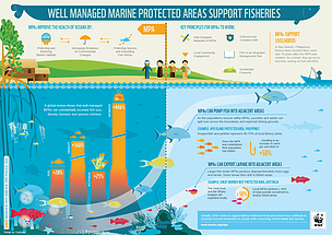 Infographic describing the benefits of MPAs