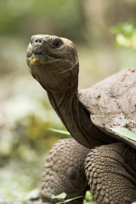 Galapagos Islands-716