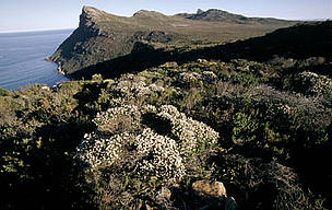 "Cape Peninsula National Park Table Mountain with endemic ""fynbos"" vegetation. Typical of ...      © WWF / Martin HARVEY"