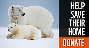 Polar Bear Habitat Wwf