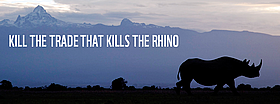 Kill the trade that kills the rhino - join the frontline!   	© naturepl.com / Rilchard Du Toit / WWF