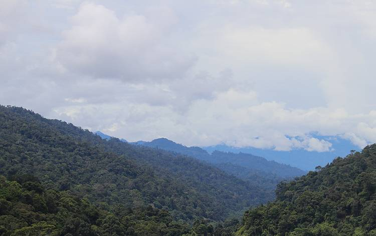 Implementing Sustainable Forest Management Through Kuba'an-Puak Corridor Project